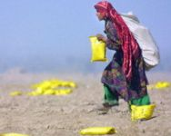 Woman picking up Humanitarian Daily Ration